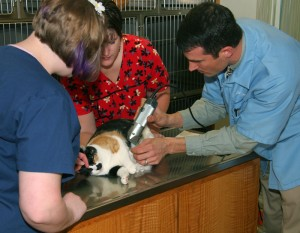 Veneta Vet Hospital provides a variety of services for your pet